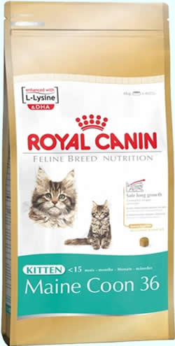 royal canin maine coon 31 royal canin. Black Bedroom Furniture Sets. Home Design Ideas